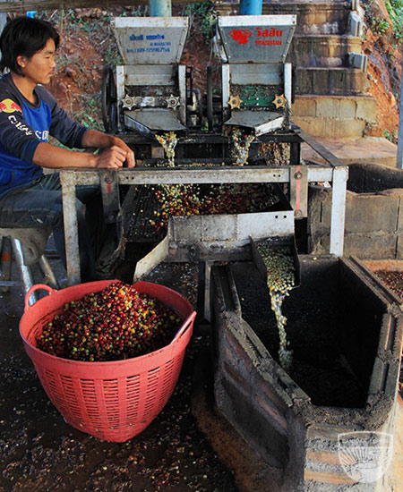 Ranjuan coffee process
